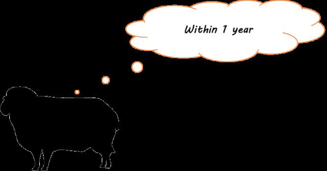 羊 1年未満