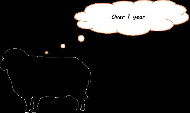 羊 1年以上